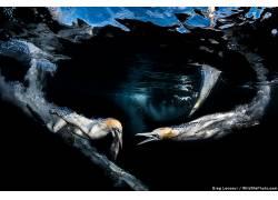 性质,动物,海,水,水下,鱼,鸟类,泡泡,Greg Lecoeur,野生动物67292
