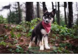 森林,性质,狗,动物,小狗477071