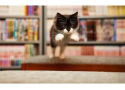跳跃,猫,动物477068