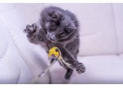 跳跃,猫,动物480406