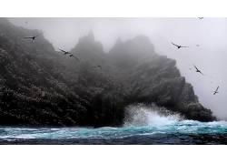 性质,动物,滨,海,鸟类497456