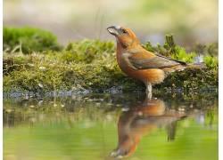 动物,鸟类,苔藓464997