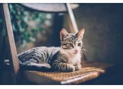 椅子,猫,动物558104