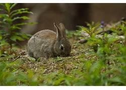 植物,动物,哺乳动物,兔372445