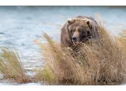 性质,动物,熊529835