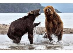 性质,动物,熊575685