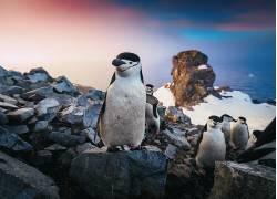 野生动物,动物,企鹅627396