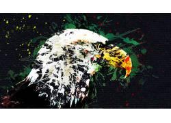 动物,鸟类,鹰,数字艺术,艺术品,油漆飞溅,帆布608272