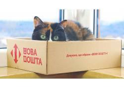盒子,猫,动物602922