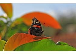 植物,宏,动物,昆虫,鳞翅类372401