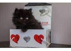 盒子,猫,动物647711