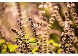 植物,宏,性质,昆虫,动物558070
