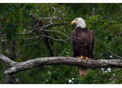 动物,鸟类,鹰464971