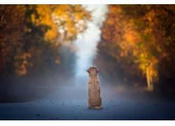 狗,秋季,树叶,蓝色,动物567498