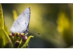 植物,宏,鳞翅类,昆虫,动物372365