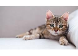 眼睛,猫,动物,小猫621675