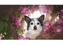 狗,花瓣,动物,看着观众633040
