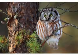 植物,树木,动物,猫头鹰,鸟类455818
