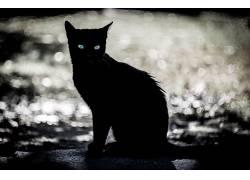 眼睛,黑暗,动物,猫529778