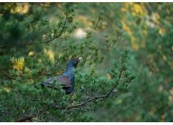 动物,鸟类376732