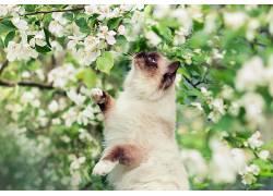 植物,猫,动物,开花,哺乳动物436898