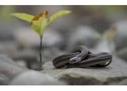 植物,石头,性质,动物,蛇,爬行动物567553