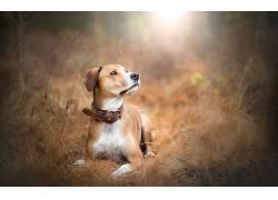 性质,动物,狗558065
