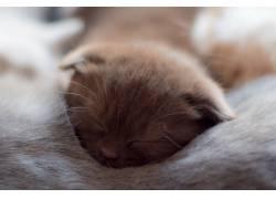 睡眠,猫,小动物,动物552856