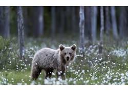 野生动物,熊,景深,森林563891