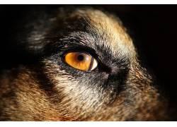 狗,面对,眼睛,动物498787