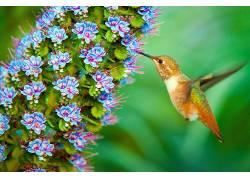 植物,花卉,鸟类,动物,宏436879