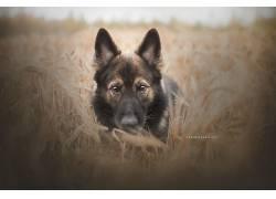 狗,领域,动物589964