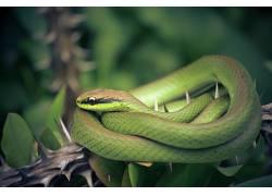植物,荆棘,绿色,爬行动物,动物,蛇,景深542386