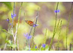 植物,鳞翅类,昆虫,动物,花卉438999