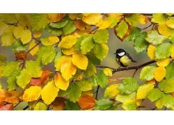 秋季,树木,鸟类,动物566955