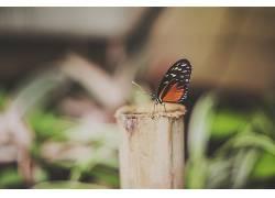 植物,鳞翅类,蝴蝶,昆虫,动物388950