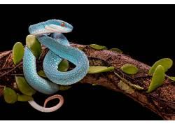 科,蛇,树叶,爬行动物625194