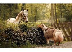 狗,马,动物674897