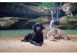 狗,黑色,动物,瀑布,岩570103