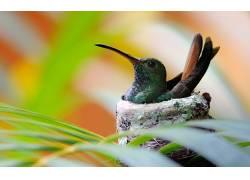 植物,鸟类,动物,宏,colibri(鸟),蜂鸟377337