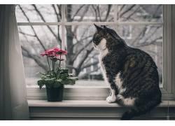 窗口,花卉,猫,动物489094