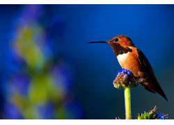 植物,鸟类,动物,宏436871