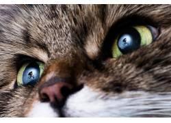 性质,动物,猫,反射,循环,BMX,跳跃,轮廓,特写,体育,景深453381
