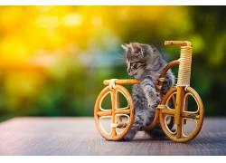 性质,动物,猫,小猫,小动物,自行车,微缩模型,木,木表面,景深,在户