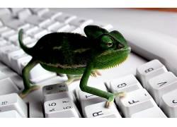 键盘,动物,变色龙398340