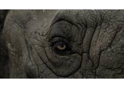 性质,动物,皱纹,特写,眼睛,犀牛,皮肤392144