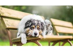 长凳,在户外,狗,动物503634