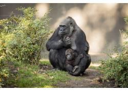 母亲,孩子,小动物,爱,类人猿563013