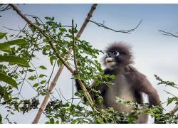 类人猿,动物,树木638079