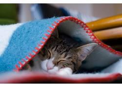 闭着眼睛,睡眠,猫,动物566404